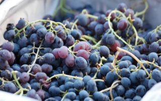 Maquinaria para la recepción de la uva