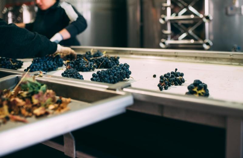 transportar la uva en bodega