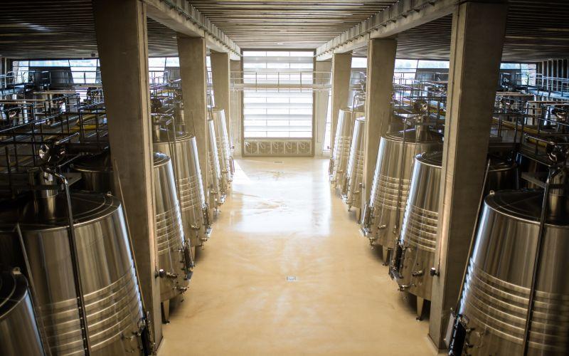 elaboración vino después vendimiar